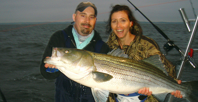Chesapeake bay fishing charter booking trophy rockfish for Chesapeake fishing report
