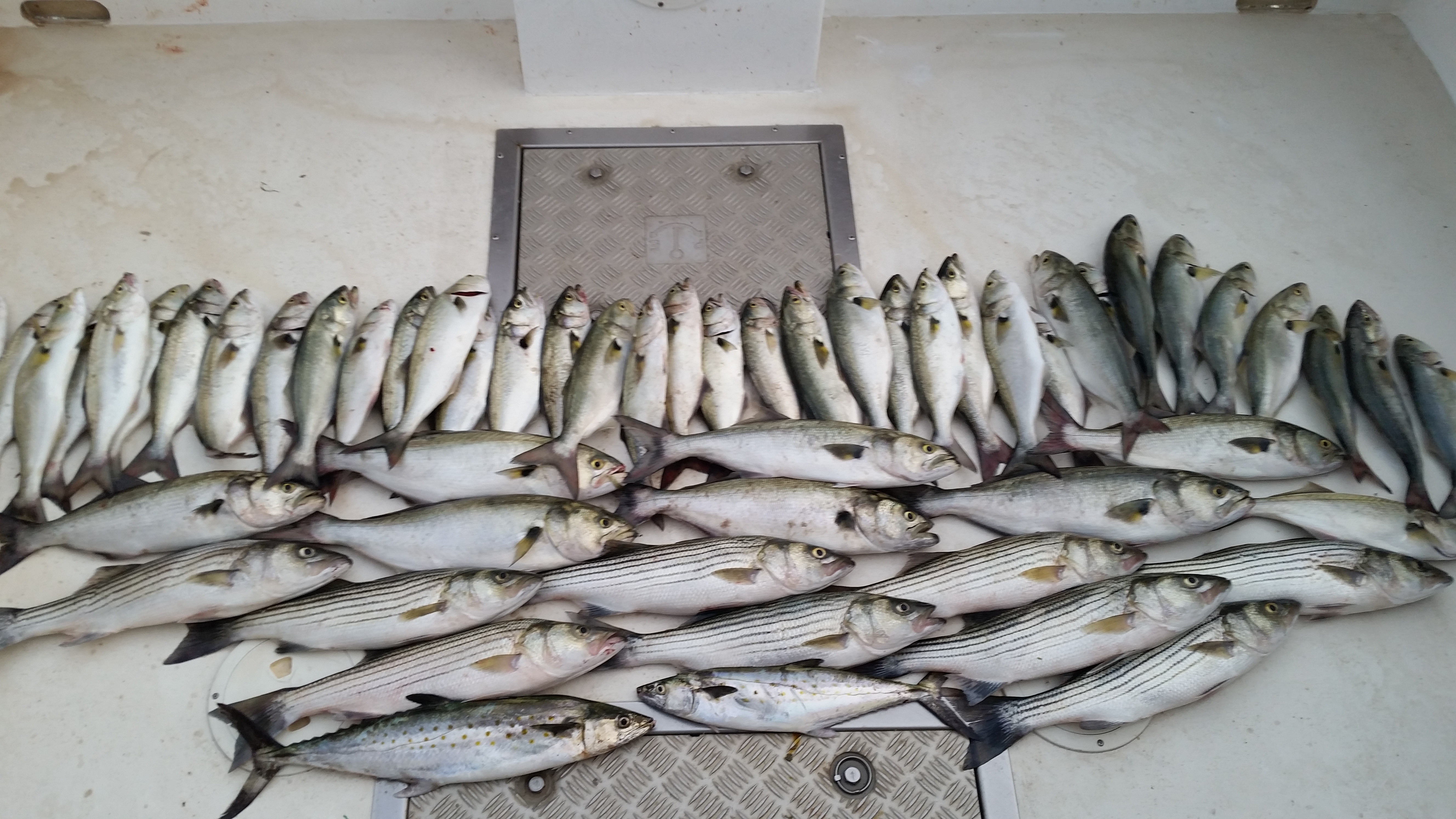 Chesapeake bay fishing charter mixing it up in the upper bay for Upper chesapeake bay fishing report